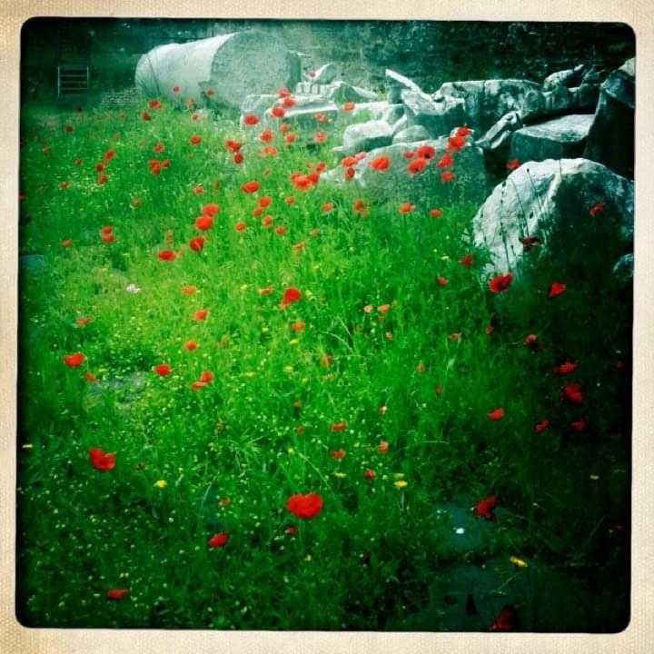 Poppies eatbaketravel.com